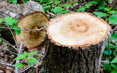 Hurst Meadows Update – Tree Cutting